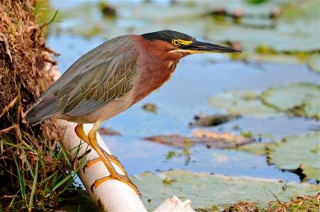 Valor. Las aves son el primer paso de conservación de un entorno.