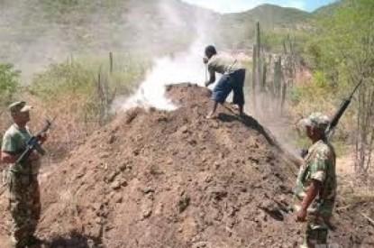 Pinos depredados en Pedernales.