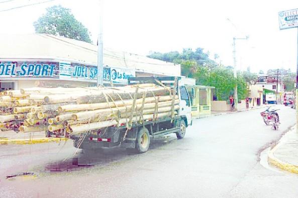 Camiones cargan pinos en Constanza.
