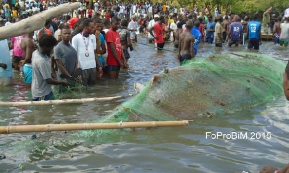 Un grupo de ciudadano haitianos trató de salvar a la ballena. Foto FoProBim