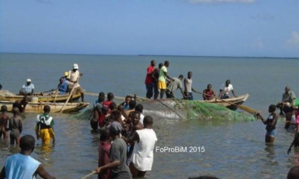 Las heridas y la marea baja hicieron imposible salvar a la ballena. Foto FoProBim