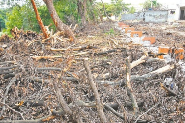 La tala de árboles se hizo en la ribera del río Yaque del Norte. (Abel Ureña)